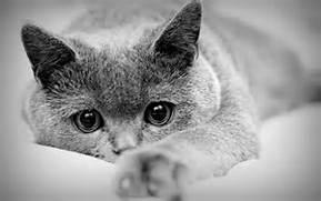 chat pension féline val de vergy proche dijon